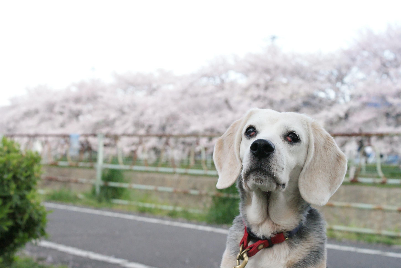 犬の緊張感はどこからくるの 後編 In The Blog