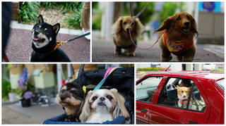 10犬.jpg
